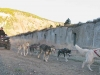 Odaroloc Sled Dog Training Camp Hale, CO