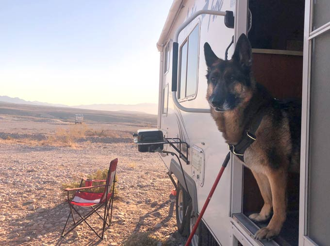 full-timing with dogs,German Shepherd,anxious,pets,RVing