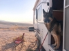 Wyatt Standing Guard, Lake Mead Free Boondocking
