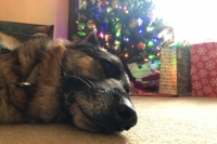 Christmas Wyatt