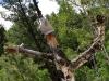 Vickers Ranch Buc-ees Tree Man