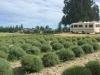 Lavender Farm Harvest Hosts