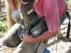 Vicker Guest Ranch Horse Ride Colorado Farrier