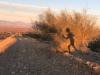 Coachella Running