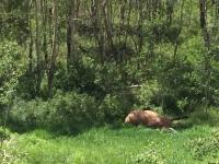 RIP Vickers Ranch Ride Horse