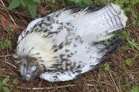 Dead Bird in Westfir Forest