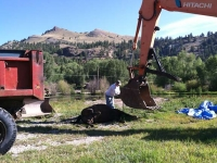 dead horse disposal ranch workamping