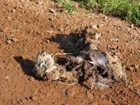 Smelly Colorado County Road Mystery Roadkill