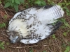 Dead Bird in Westfir Forest