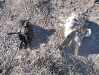 Electrocuted birds under New Mexico power pole.