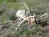 Rocky Mountain Colorado Boneyard