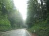 US HWY 101 California Big Redwood Trees