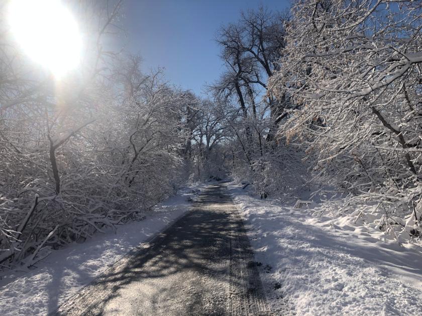 Snow on Poudre River Trail Laporte Colorado