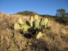New Mexico Cacti near Lincoln National Forest
