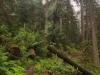 Westfir Oregon Trail Running