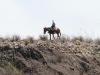 Vaquero de Mexico en el Rio Grande