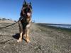 Port Townsend Dog-Friendly Beach