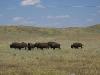 Wyoming Where the Buffalo Roam