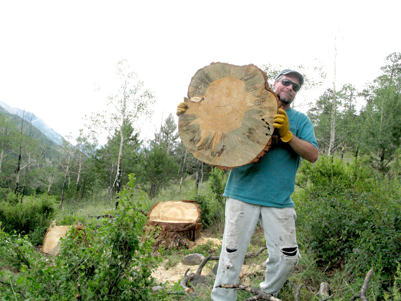 Jim holds Ponderosa Pine slab after falling tree