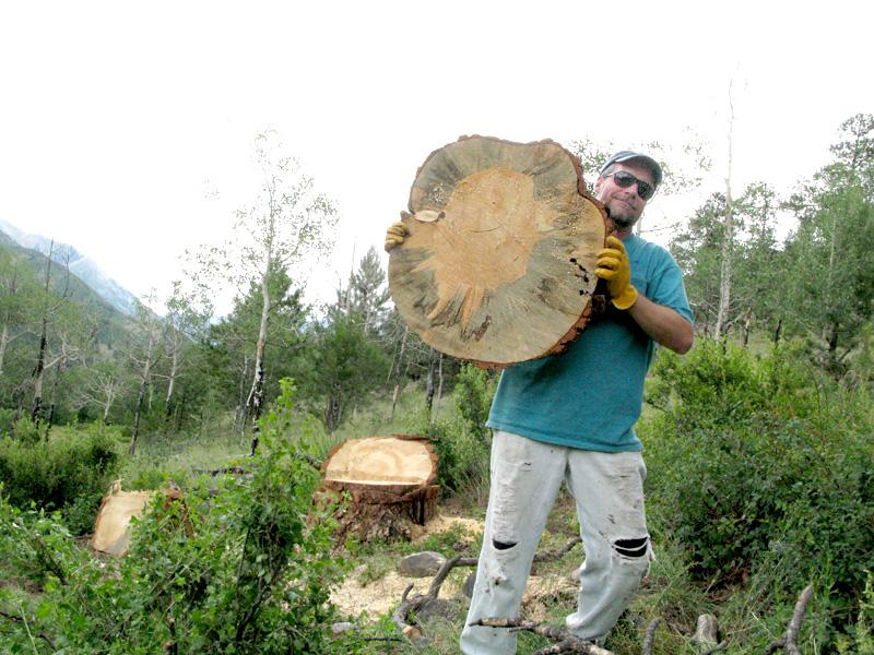 Jim holds Ponderosa Pine slab after falling tree