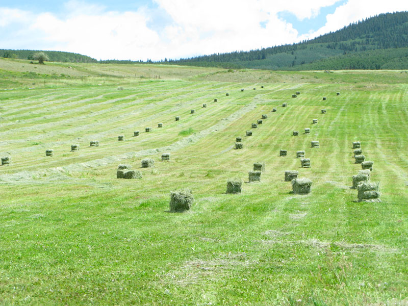 Workamping at Vickers Ranch means haying