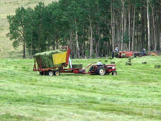 Jim helps stack hay at Vickers Ranch