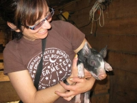 Helping out at Diggin Dust Heritage Hog Farm