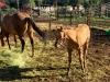 Vickers Ranch Workamping Horse Feeding