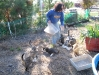 Feeding time for outdoor cats at Safe Harbor Animal Rescue