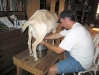 Milking Fanny the goat in the farm house