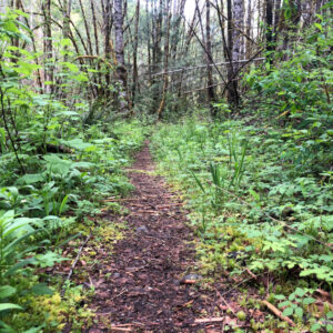 Westfir Trail Run