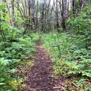 Westfir Trail Run