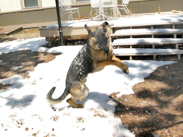 wyatt snow dance