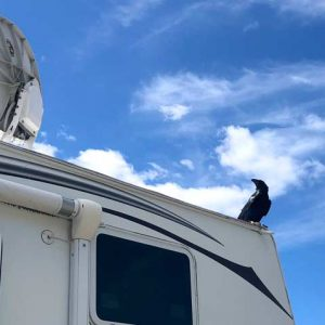 satellite raven